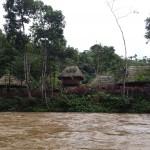 Kotokocha por el río Puyo