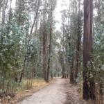 La Floresta-Parque Metropolitano Guangüiltagua