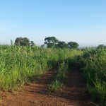 Lilongwe Area 12. Close to the river